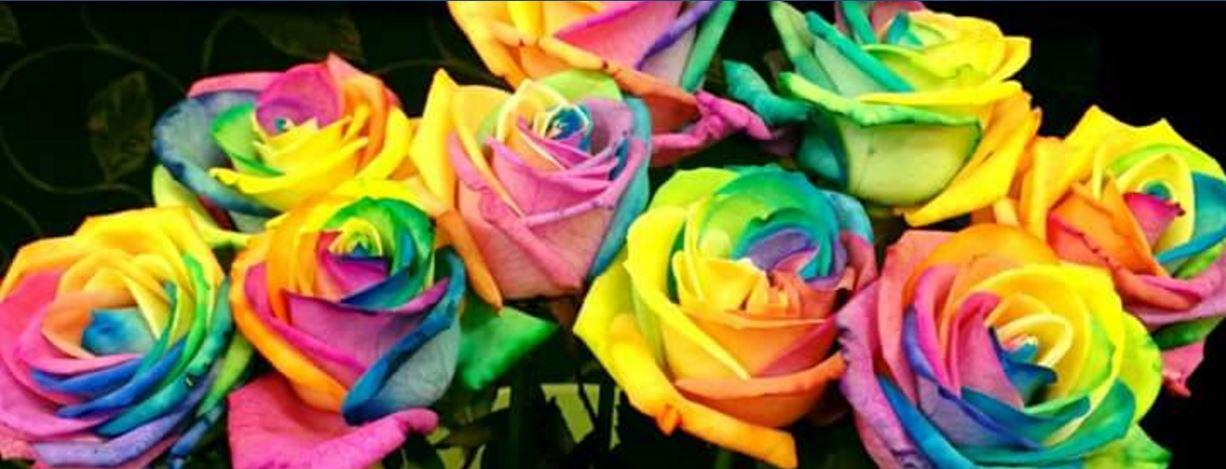 Main photo for Rainbow Flowers
