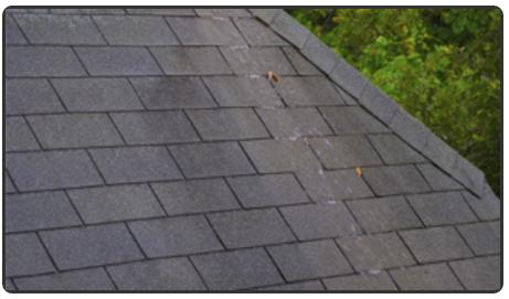 Main photo for Abbotts & Sons Roofing Ltd