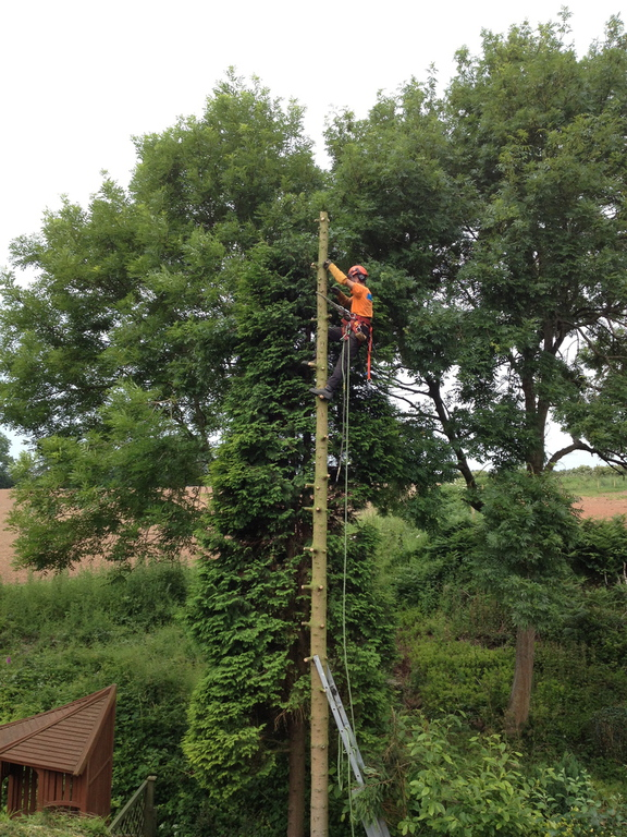 Main photo for Blackwell Tree Solutions Limited