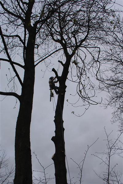 Main photo for Holme Valley Tree Services