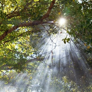 Main photo for Almondsbury Tree Service