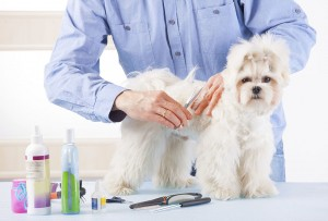 Main photo for Chips Folly Dog Grooming