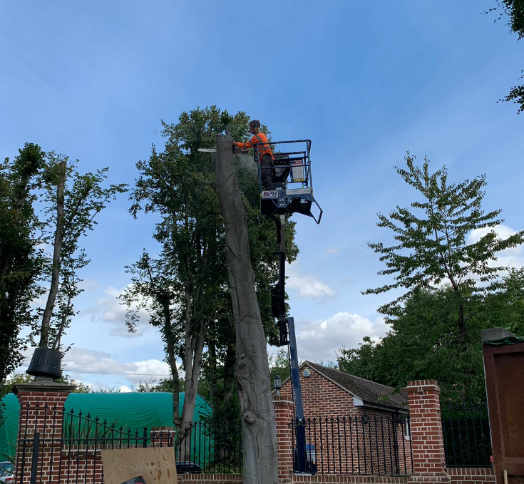 Main photo for Herts Tree Specialists