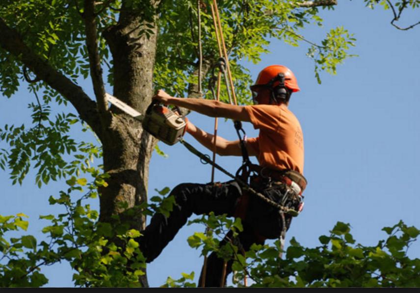 Main photo for Arbutus Professional Tree Care