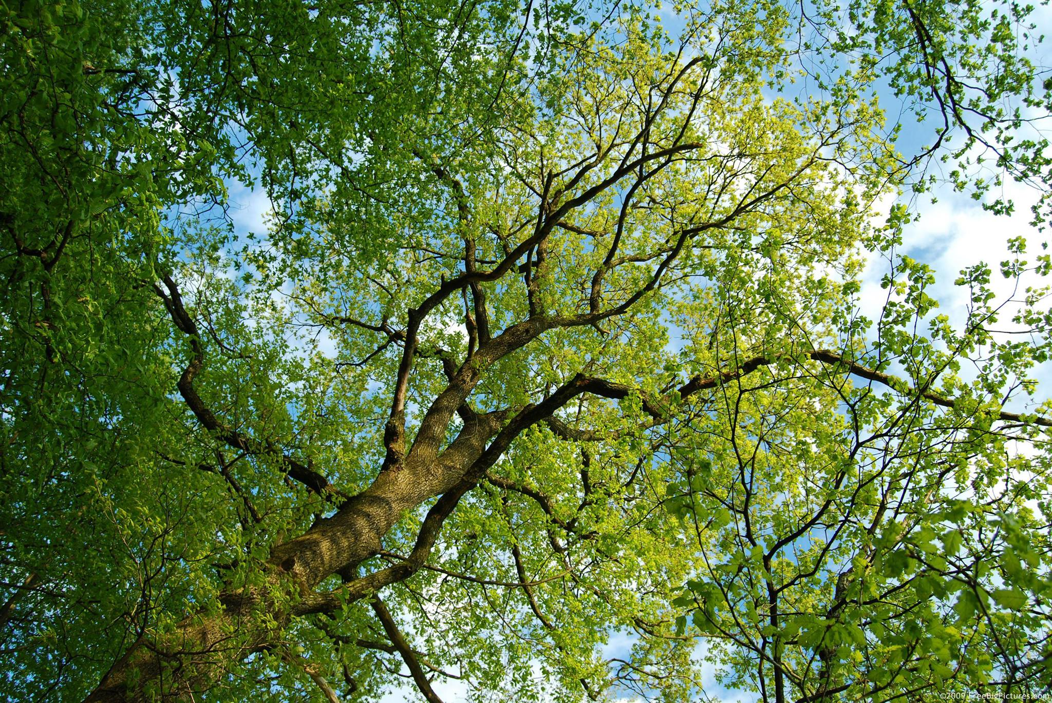 Main photo for Arborcare UK Ltd