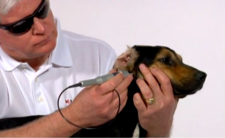 Main photo for The Dales Veterinary Centre