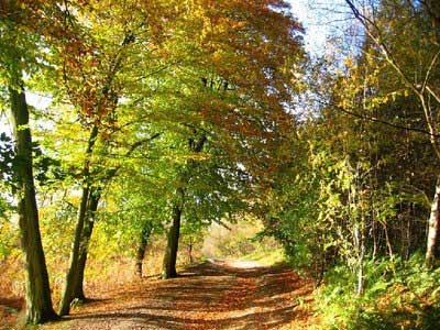 An example of Delamere Forest on the Funeral Directors in Cheshire page on Thomson Local.