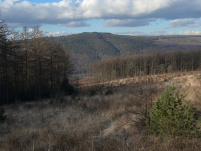 An example of Afan Forest Park on the Funeral Directors in Glamorgan page on Thomson Local.