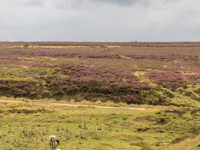 An example of North York Moors National Park on the Funeral Directors in North Yorkshire page on Thomson Local.